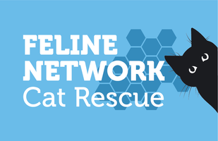 "Mrs W (PAIGNTON) supporting <a href=""support/feline-network"">Feline Network cat rescue</a> matched 2 numbers and won 3 extra tickets"